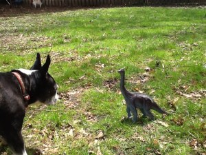 """Predator Challenge! This diplodocus is about to be eaten by a giant Boston terrier. In 200 words, explain why this situation is implausible."""