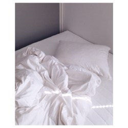 Bedbed