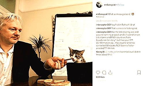 Julian Assange và con mèo nuôi tại đại sứ quán Ecuador ở London, Ảnh: Instagram.