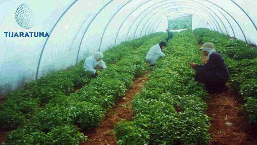 الزراعة البديلة وقائمة محاصيلها