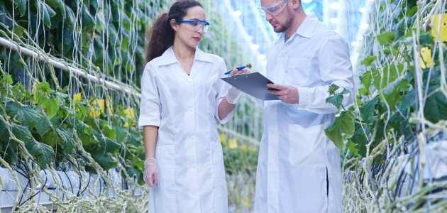 إدارة المشروعات الزراعية