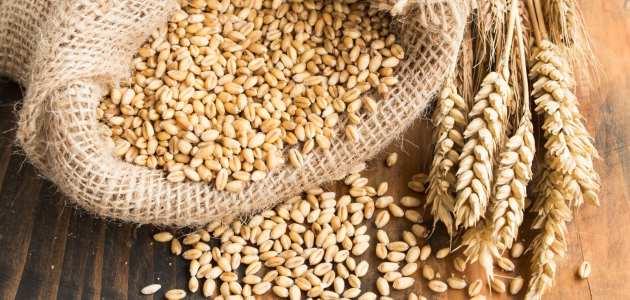 نبذة عن تاريخ تجارة القمح في العالم
