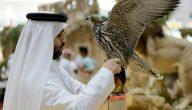 ماذا يقدم سوق الشارقة من تنوع الحيوانات الأليفة