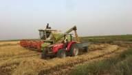 زراعة مربحة في موريتانيا