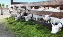 دراسة جدوى بناء مزرعة تربية المواشي