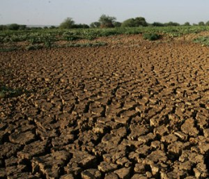 fao-drought-sequia