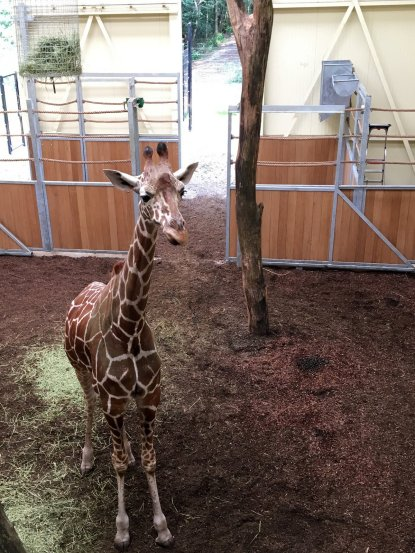 Zooparc Overloon (17)