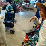 Then this ginormous Malamute came in. The Lady talked to the human for a while.