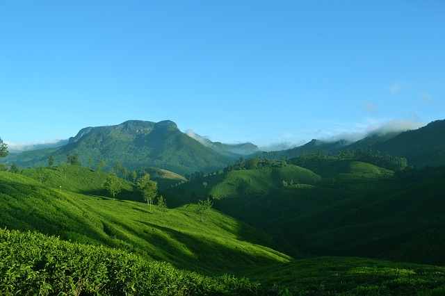 The Tea Gardens of Munnar