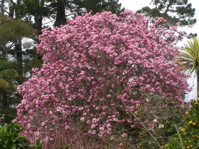 Impressively pink - the original Serene