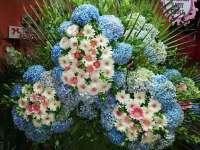 أزهار رمضان  طرطوس