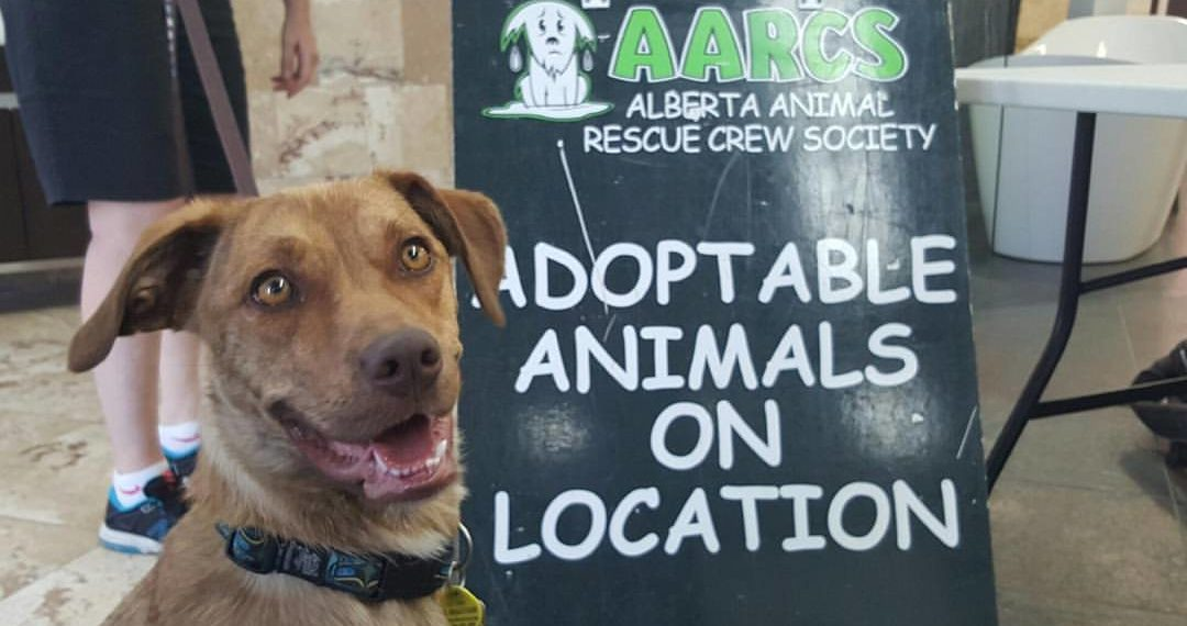 AARCs Adoptable Animals at Tile and Stone Source