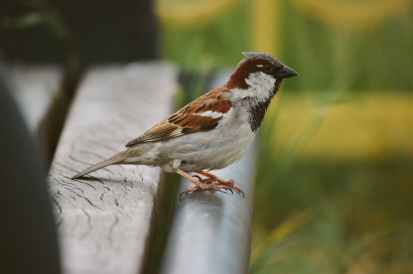 sparrow perched on bench