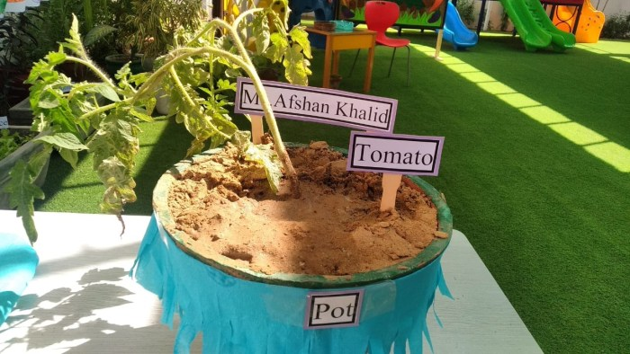 Plant pot with tomato plant