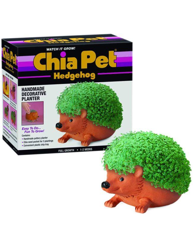 Hedgehog Chia Pet