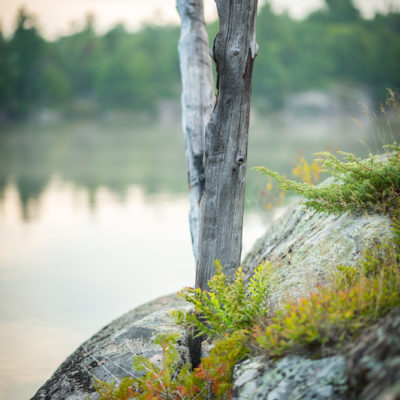 tree on the french river