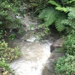 fila-naranjo-bosque-de-paz-2