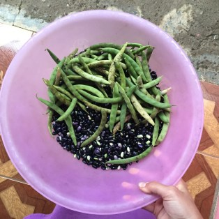 fresh-beans-tiernos