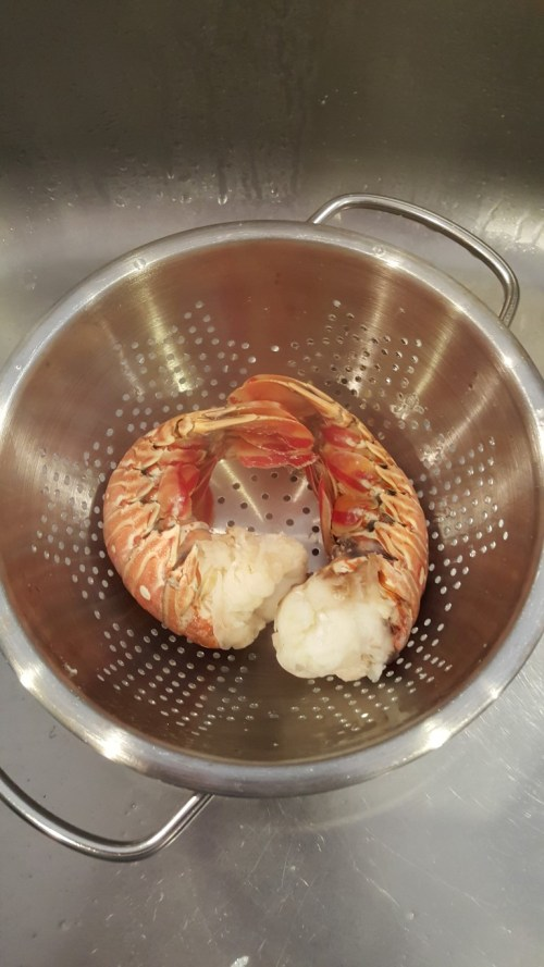 Cooked tails cooling in the sink. Cool just long enough so you can handle the tails and snip the shells off.