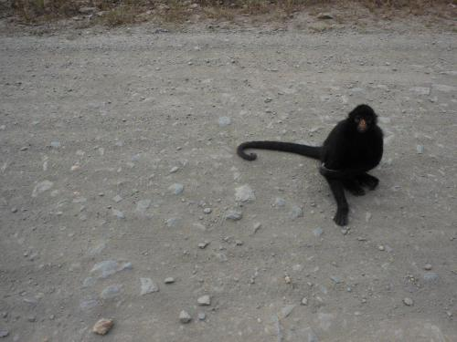 The shifty monkey who tried to pick our pockets.