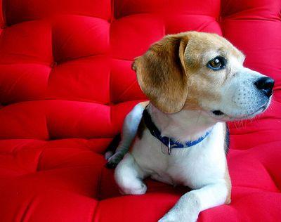dog-futon3.jpg