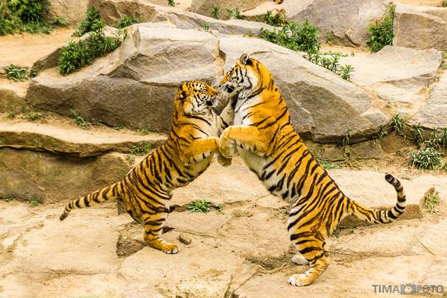 fotoworkshop grundlagen im zoo