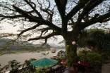 Big Tree Cafe macht seinem Namen alle Ehre