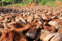 Coconut Fields forever