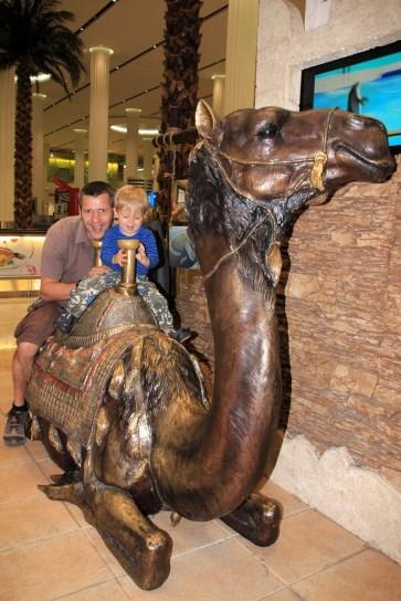 Kamele statt Elefanten - Willkommen in Dubai