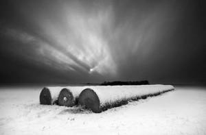 SOLD: Moonrise • ©Daniel Coburn