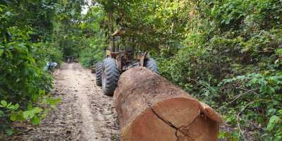 Log being skidded to illegal sawmill in the forest near Chapadao, Santarem
