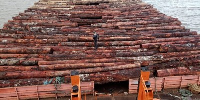 Logs on barge in the Rio Mamuru seized