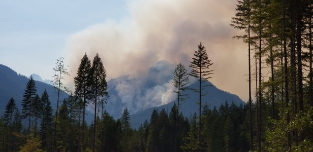 The Olympic Peninsula Maple fire that was started by a timber theft convicted with the use of Tree DNA.