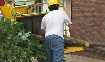 Tree Service in Walnut Creek | Timberland Tree Care