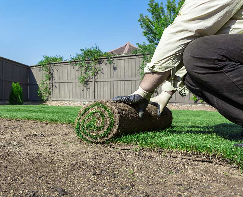 Sod installation in Walnut Creek, Callifornia