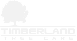 Timberland Tree Care - Tree Service in Walnut Creek, CA
