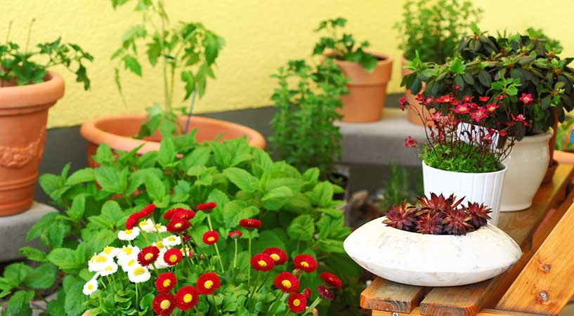the best plants for an apartment balcony garden