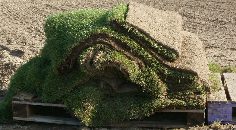 What to Do if your New Sod is Dying