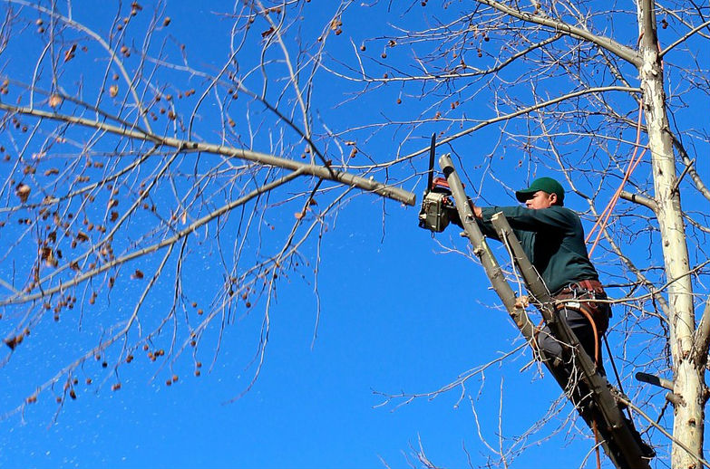 How to Pick a Tree Service Near Me