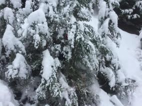 20181201_TT_Xmas_Tree_Run_77
