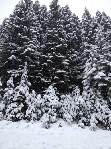 20181201_TT_Xmas_Tree_Run_94