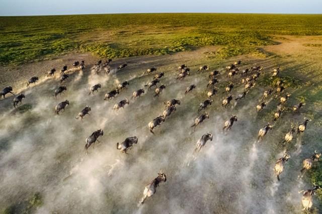 The Great Wildebeest Migration - under canvas