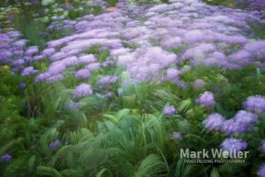 Timestack photography of abstract green purple