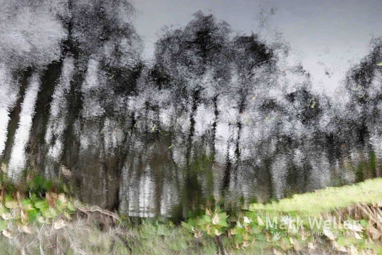 Timestack photography of abstract trees