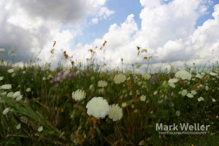 Timestack photography of clouds over flowers in a field