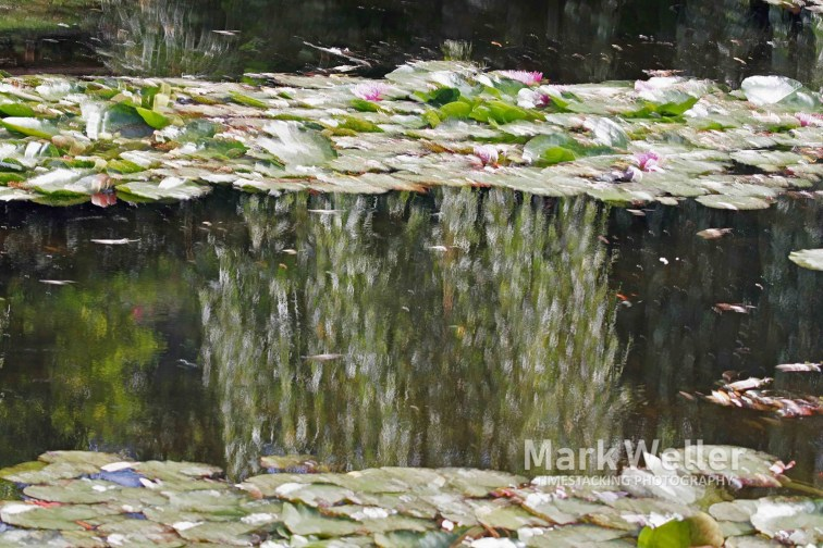 Timestack photography of lillies on a pond