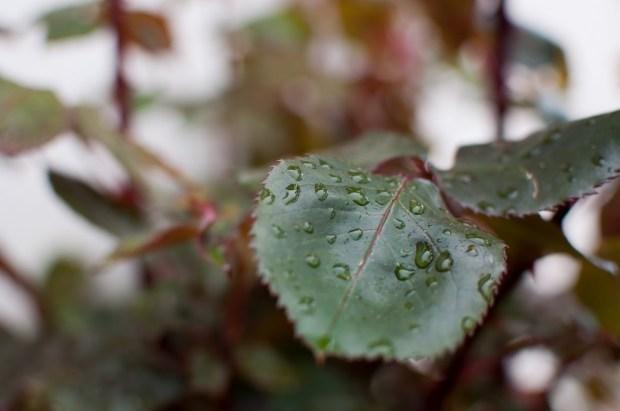 In between rains