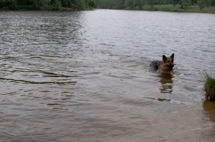 Cody-swimming-15