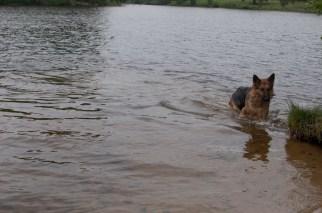 Cody-swimming-17