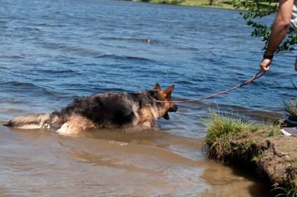 Cody goes swimming